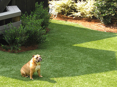 Tour Greens options for lawn and pets